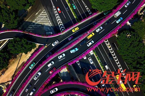 花城也要走精品化路线,未来广州赏花应该这样赏