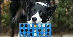 太聪明!英国一牧羊犬玩四子棋竟打败主人