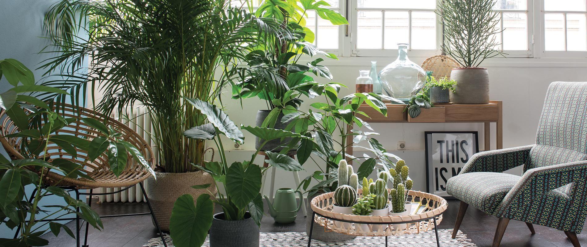 如何让家绿意盎然? 绿植养护技巧