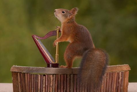 瑞典小松鼠开音乐会 吹拉弹唱样样都会