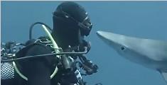 """鲨鱼主动向潜水员""""献吻""""画面好萌好有爱"""