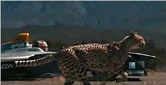 猎豹大战电动赛车 野外上演速度与激情