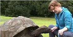 罕见!地球最长寿动物185岁巨型陆龟