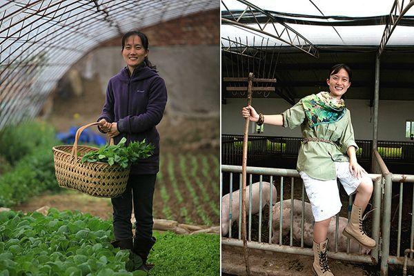 海归美女博士回京种菜养猪 年收入800万