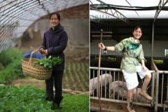 海归美女博士回京种菜养猪 年入800万