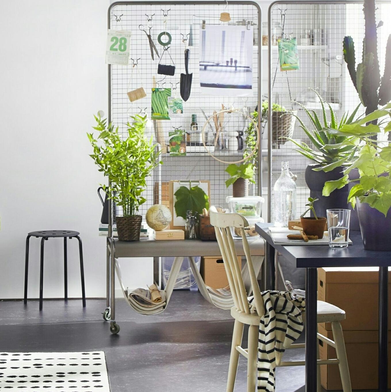家中植物如何摆放?20种添绿技巧