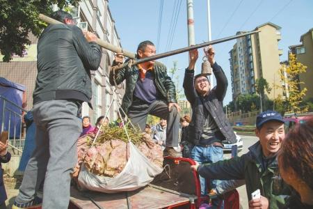 简阳老农种出238斤红薯王 专家问卯窍他就是不说