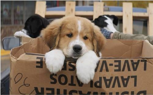 给狗狗吃骨头有风险?
