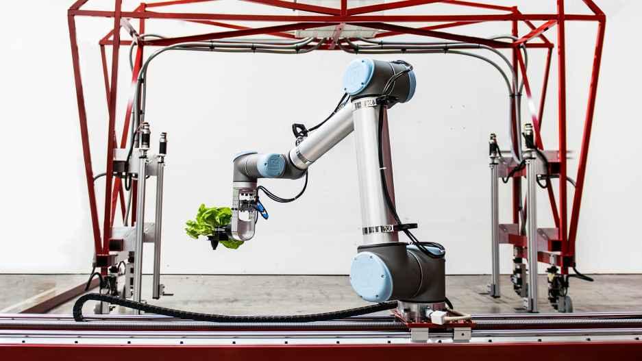 种菜机器人从播种干到包装,成本和传统种植一样低