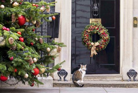 英首相府摆圣诞树 首席捕鼠官坚守岗位