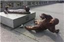 梅西雕像在阿根廷又恶意被毁:砍断双腿碎片一地