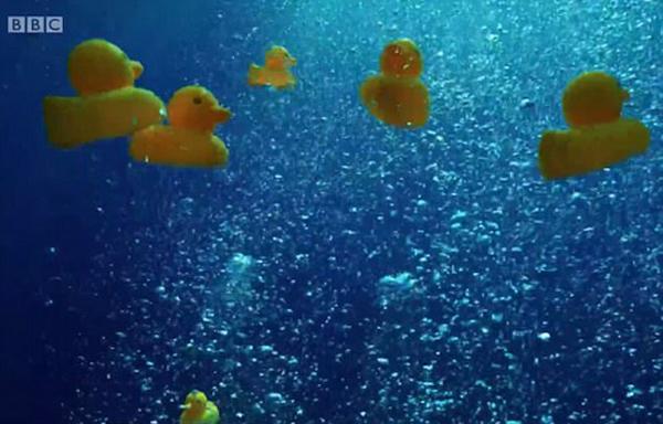 英纪录片团队向海洋中投放250只小黄鸭 激怒观众