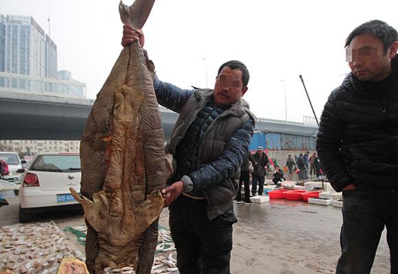 青岛码头被曝公开叫卖鲨鱼 小鲨鱼10元一斤
