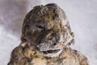 科学家发现5万年前狮尸体
