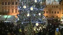 布拉格点亮最大圣诞树
