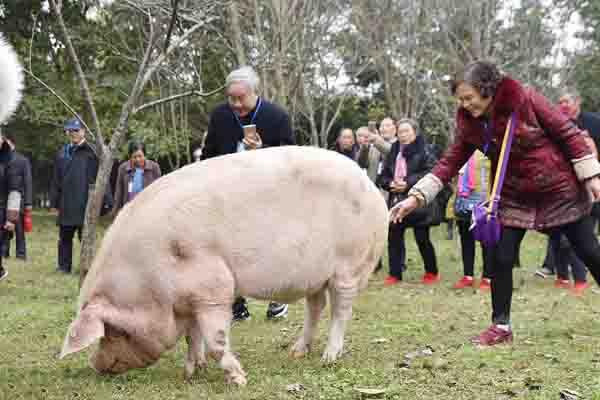 """400斤""""猪坚强"""" 独享""""一室一厅""""套房"""