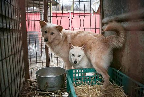 韩国逾170只狗获救免于电刑成补身食物