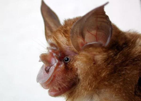 SARS病毒追击者15年后在云南洞穴找到病源蝙蝠