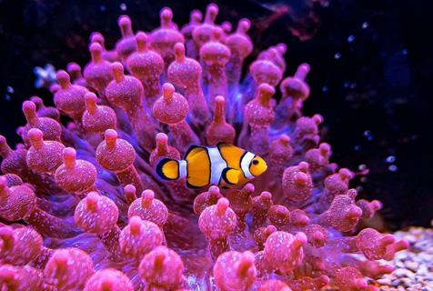 探访法国水族馆:色彩缤纷的海底世界