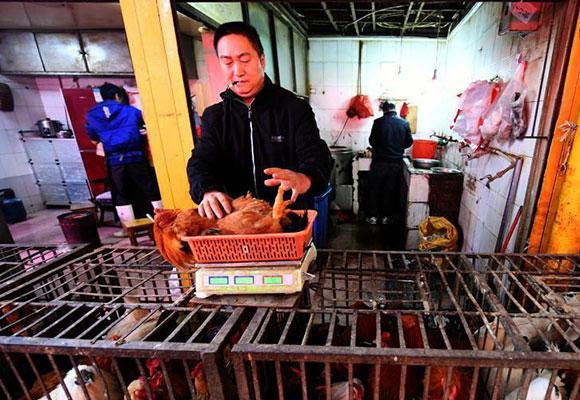 云南确诊1例H7N9病例 活禽市场未受影响