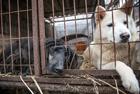 韩数百狗狗获救免于电刑