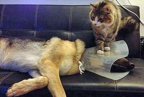 猫猫狗狗都是一家人