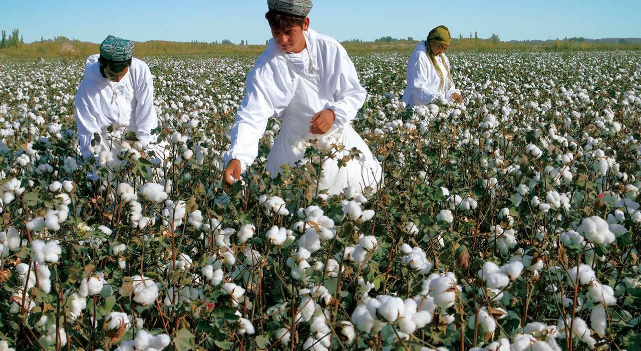 新疆棉花地里的穷娃为挣钱拒清华来CBA 不到3年超阿联小丁
