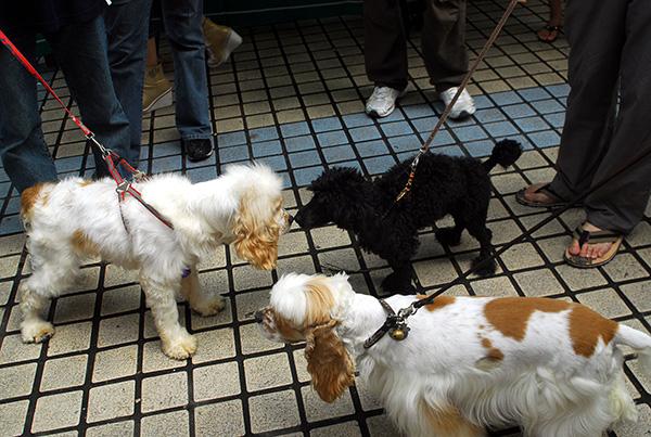 海口启动城市养犬专项整治行动:将收容流浪犬