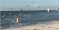 女孩遭群鸟袭击跑至海中