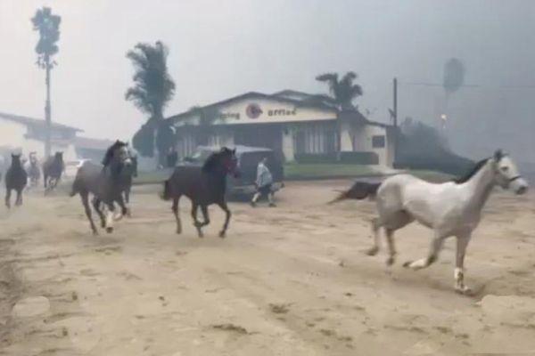 美国加州山火持续蔓延 马群撞破围栏逃命