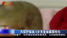 为保护妹妹 5岁男童被藏獒咬伤