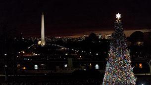 美国华盛顿点亮国会圣诞树