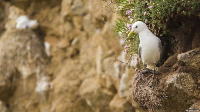 英媒:过度捕捞致海鸟生存受威胁 栖息状况引担忧