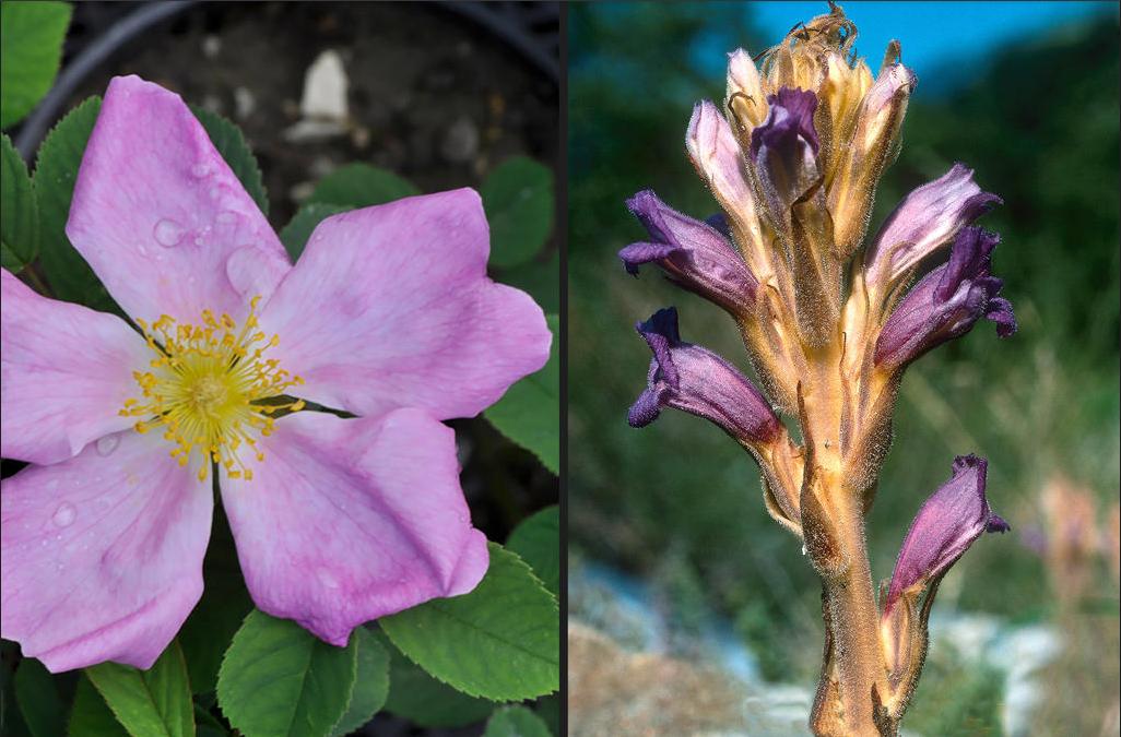 参观瑞士植物园 欣赏濒临绝迹的名花异草