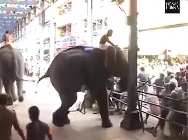 印大象宗教活动中突然失控冲进人群致1死12伤