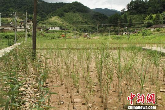 江西明年开征环保税 征收税额已经确定