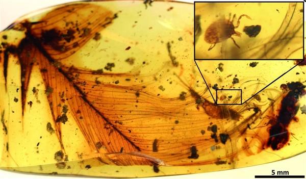 牛津大学从恐龙化石中发现吸血蜱:成于白垩纪