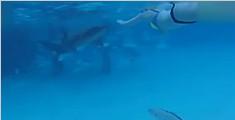 新婚夫妇度蜜月遭鲨鱼袭击 新娘以为是恶作剧