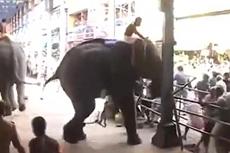 印大象失控冲进人群致1死12伤