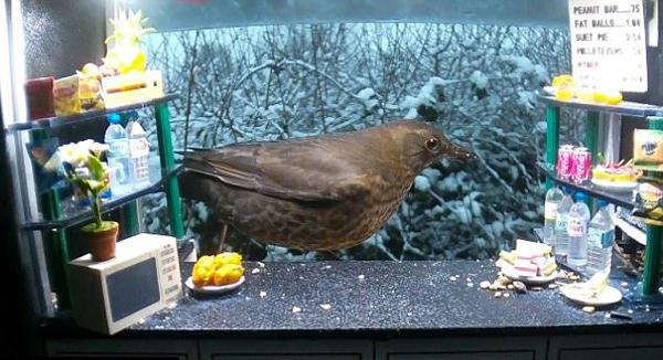 英摄影师窗台建迷你点心屋吸引诸多鸟儿光顾