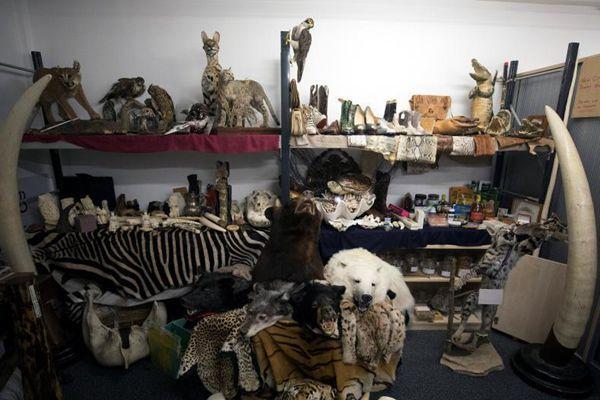 英机场查扣濒危物种标本 种类繁多触目惊心