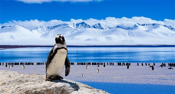 巨型古代企鹅:身高达一米八 能与人类比肩