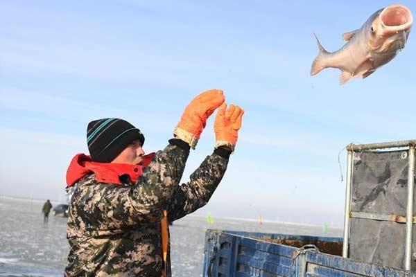 查干湖进入冬捕黄金时间 渔夫激情开捕