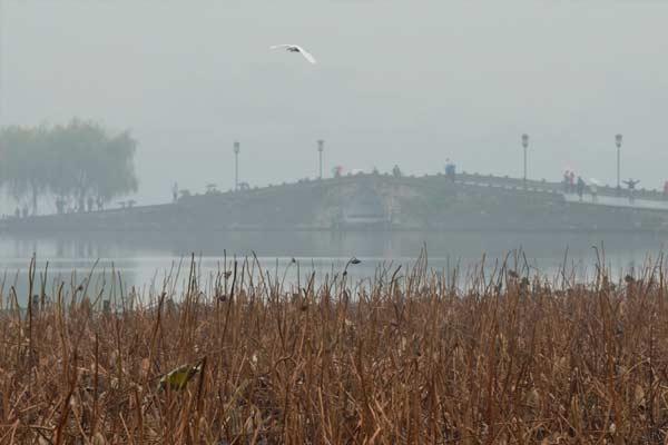 雨雾西湖 游兴不减
