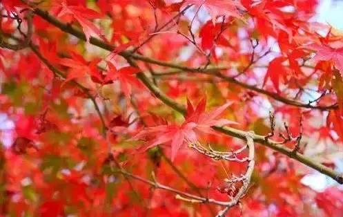 秋冬的台湾,景色比你想象中的更美妙