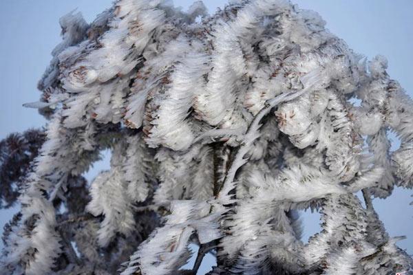 """重庆高海拨地区现冰凌景观 树木穿""""冰衣"""""""