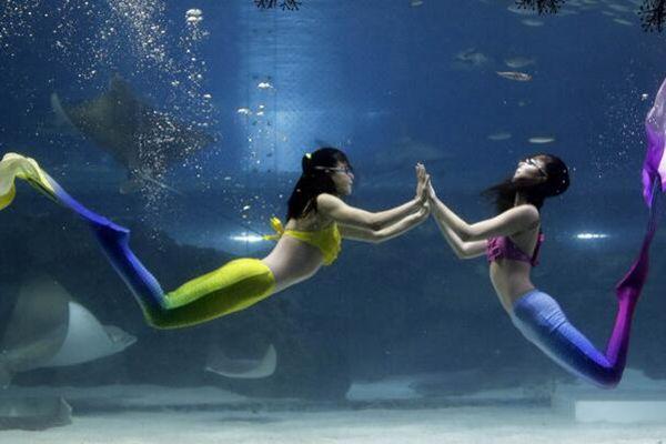 韩水族馆办圣诞水下表演活动 潜水员变美人鱼水下起舞