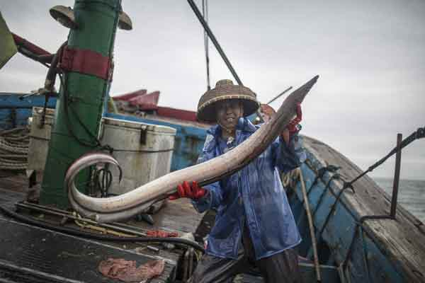 9个渔民出海一天 仅捕到一条鳗鱼