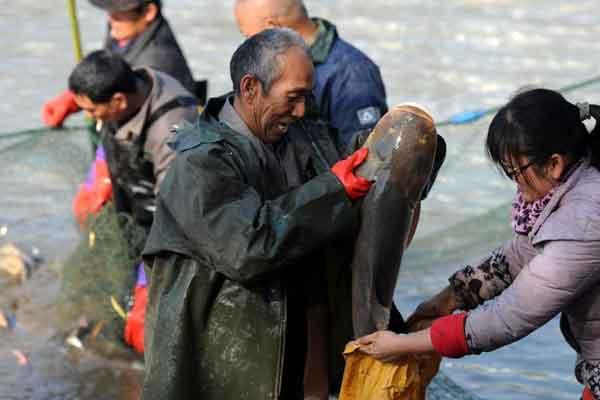 武汉一高校捕鱼4万斤 学生可凭票免费吃