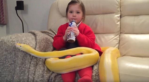 胆量过人!英小女孩边喝牛奶边抚摸巨蟒